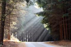 Wanderweg-im-Herbst